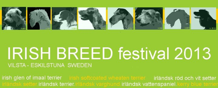 irish breed festival